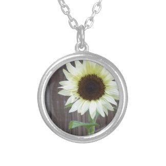 Weiße Sonnenblume gegen einen verwitterten Zaun Versilberte Kette