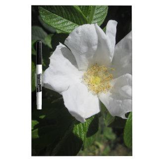 Weiße Strand-Pflaumen-Rose Memoboard