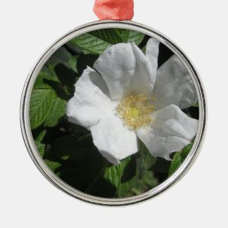 Weiße Strand-Pflaumen-Rose Silbernes Ornament