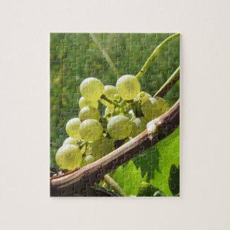 Weiße Trauben auf der Rebe. Toskana, Italien Puzzle