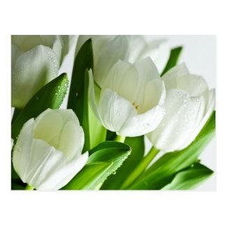 Weiße Tulpen Postkarte