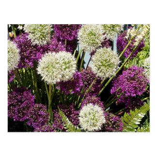 Weiße u. lila Lauch-Blumen Postkarte