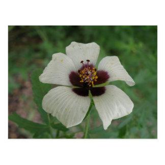 Weiße und lila Passionflower-Postkarte Postkarte
