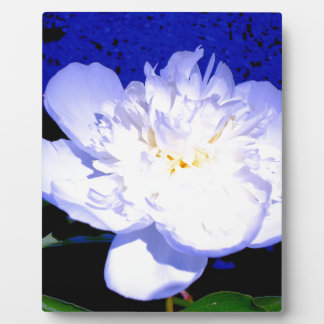 Weiße und lila Pfingstrose Fotoplatte