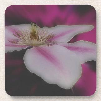 Weiße und rosa Clematis-Blume Untersetzer