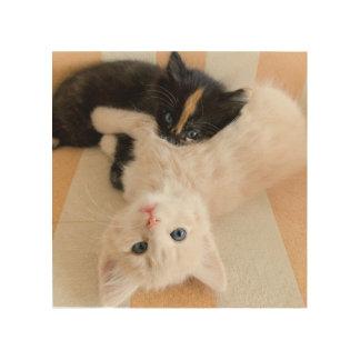Weiße und schwarze Kätzchen Holzleinwand