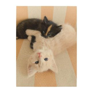 Weiße und schwarze Kätzchen Holzwanddeko