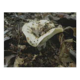 Weiße Vasen-Pilz-Postkarte Postkarte