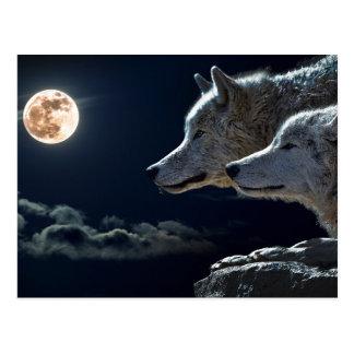 Weiße Wölfe im Vollmond Postkarte