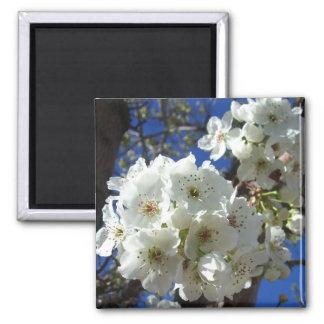 Weißer Blüteni Ornamental-Birnen-Baum Quadratischer Magnet