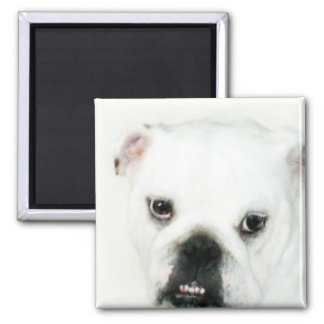 Weißer Bulldoggenmagnet Quadratischer Magnet