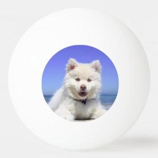 Weißer finnischer Lapphund Welpe niedlich Ping-Pong Ball