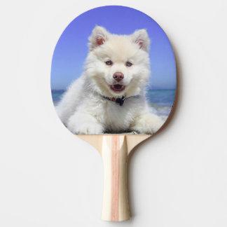Weißer finnischer Lapphund Welpe niedlich Tischtennis Schläger