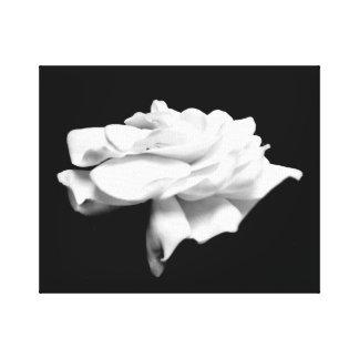 Weißer Garten-Schwarz-Hintergrund Leinwanddruck