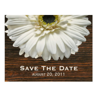 Weißer Gerbera u. Barnwood Save the Date Postkarte