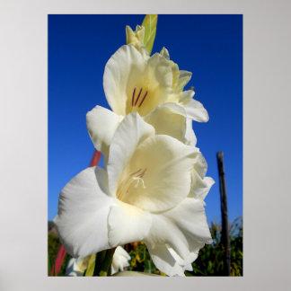 Weißer Gladiolus und der blaue Himmel Poster