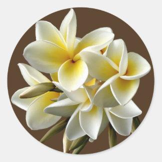 Weißer hawaiischer Plumeria-Blumenaufkleber Runder Aufkleber