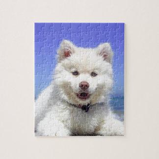 Weißer heiserer Welpe mit blauen Augen Puzzle
