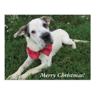 Weißer Hund Postkarte