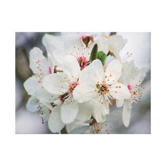 Weißer Kirschblüten-Entwurf Leinwanddruck
