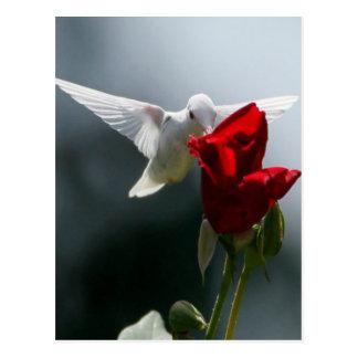 Weißer Kolibri Postkarte