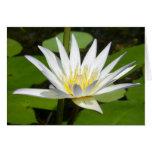 Weißer Lotos-Blumen-Karte