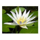 Weißer Lotos-Blumen-Postkarte
