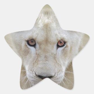 Weißer Löwe-Geist-Krieger Afrika Stern-Aufkleber