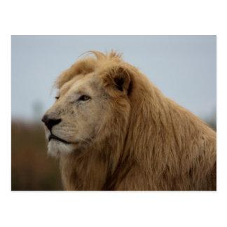 Weißer Löwe - Postkarte