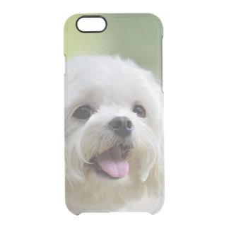 Weißer maltesischer Hund, der heraus Zunge haftet Durchsichtige iPhone 6/6S Hülle