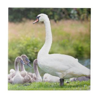 Weißer Mutterschwan mit jungen Küken Fliese