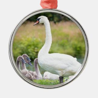 Weißer Mutterschwan mit jungen Küken Rundes Silberfarbenes Ornament