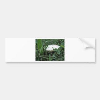 Weißer Pilz auf einer grünen Wiese Autoaufkleber