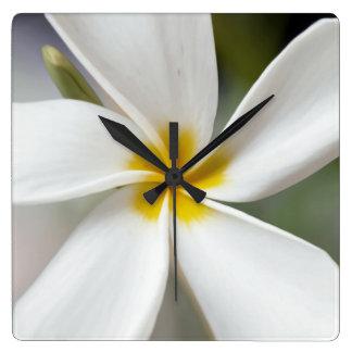 Weißer Plumeria - Makroporträt Quadratische Wanduhr