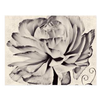 Weißer Ranunculus-Blumen-Schwarz-Hintergrund Postkarte