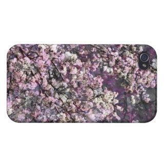 Weißer rosa Kirschblüten iPhone 4 4s Kasten iPhone 4 Etuis
