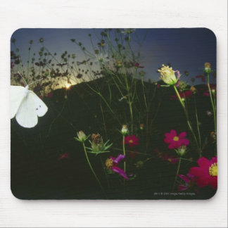 Weißer Schmetterling im Flug am Sonnenuntergang Mousepad