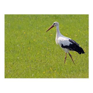 Weißer Storch auf einer Wiese Postkarte
