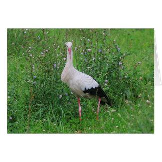 Weißer Storch Grußkarte