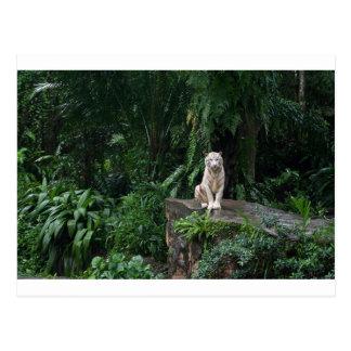 Weißer Tiger im Dschungel Postkarten
