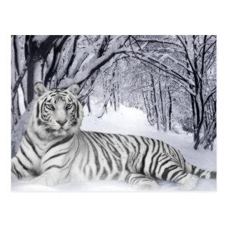 Weißer Tiger Postkarten