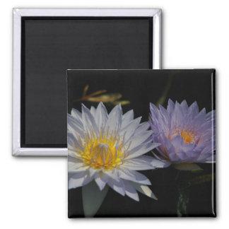 Weißer u. lila Lotos-Wasserliliemagnet Quadratischer Magnet