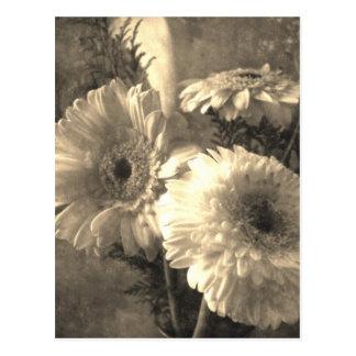 Weißer und gelber Gerbera und Calla 1 Antiqued Postkarten