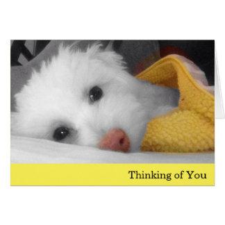 Weißer Welpe, gelbes umfassendes Denken an Sie Grußkarte