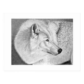 Weißer Wolf Postkarte