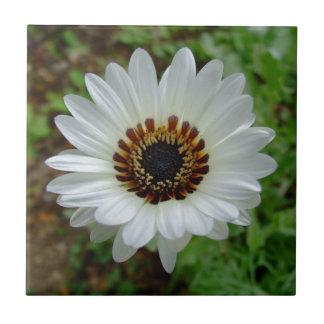Weißer Zuluprinz Gänseblümchen Fliese