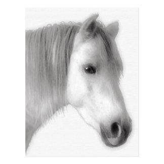 Weißes arabisches Pferdeporträt Postkarte