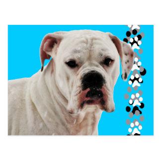 Weißes Boxer-Foto Postkarte