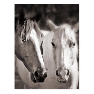 Weißes Brown-Pferdesepia-Pferd Postkarte