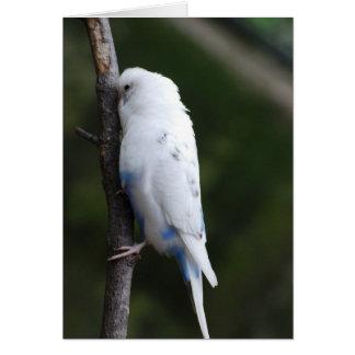 weißes budgie, das Baum umarmt Karte